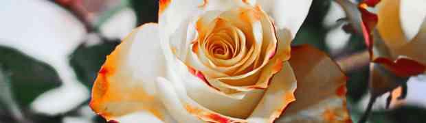 Wyjątkowy podarunek z kwiaciarni